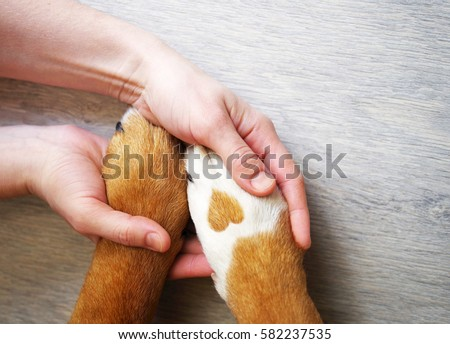 Paw Stock Images, Royalty-Free Images & Vectors | Shutterstock