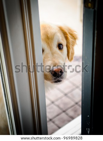 Dog peeking through the door opening - stock photo
