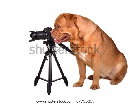 Dog photographer with camera placed on tripod - stock photo