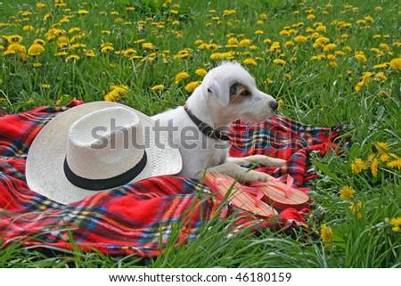 dog picknicking - stock photo
