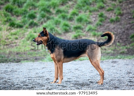 Dog playing at a park - stock photo