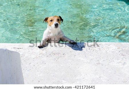 Dog playing at fountain as at swimming pool at sunny summer days - stock photo