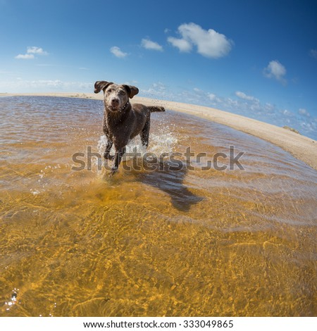 dog playing at French beach - stock photo