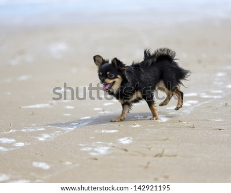 Dog playing at the beach - stock photo