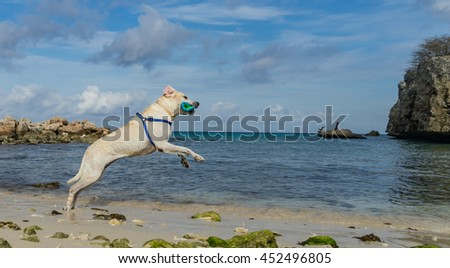 Dog playing at the beach -   Curacao Views a small island in the Caribbean Dutch Antilles