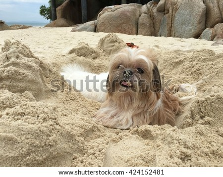 Dog playing at the beach on holiday - stock photo