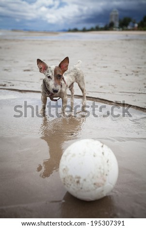 Dog playing beach soccer - stock photo