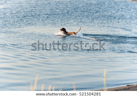 Dog playing catch in water