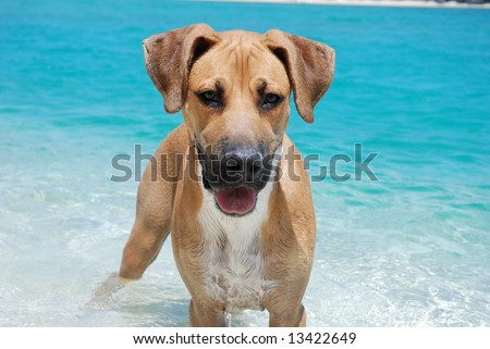 Dog playing in ocean - stock photo
