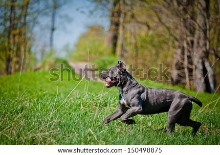 dog playing outdoors