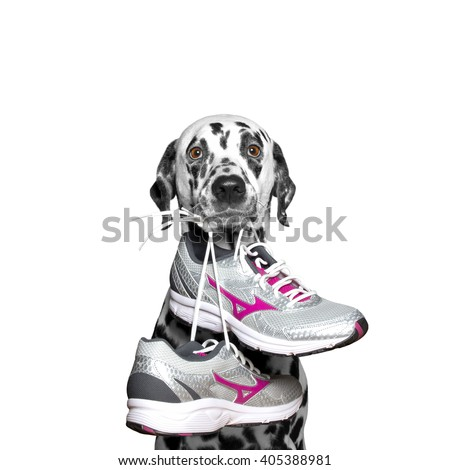 Dog playing sports -- running and jogging - stock photo