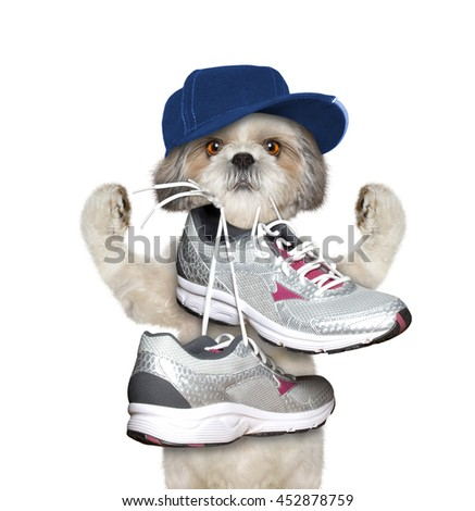 Dog playing sports -- running and jogging -- isolated on white - stock photo