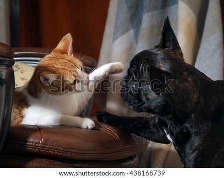 Dog playing with a cat. Cat on a chair. Cat defends paw of the dog - stock photo