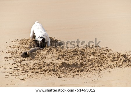 dog playing with a stick in the sand - stock photo
