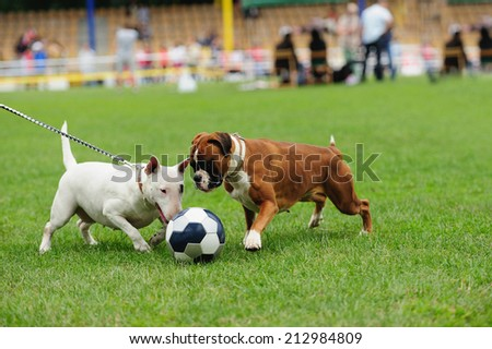 dog playing with ball on the green grass - stock photo