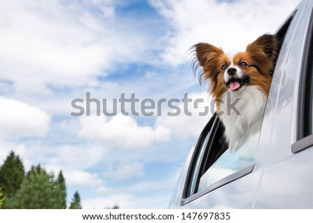 Dog poking his head out window of a car  - stock photo