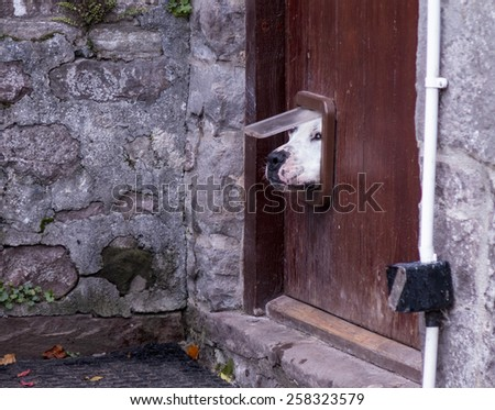 dog poking its head through a cat flap - stock photo