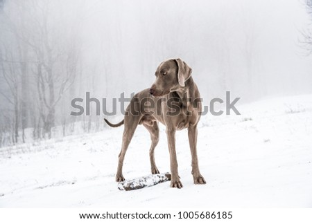 dog portrait on the white winter background