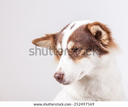 dog portrait on white background - stock photo