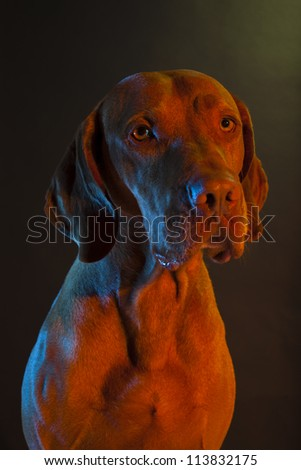 dog portrait with blue and red colored lights