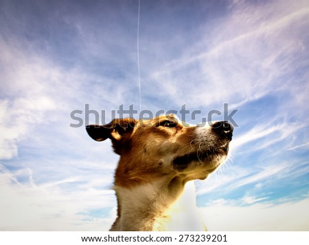 dog portrait  with blue sky in background - stock photo