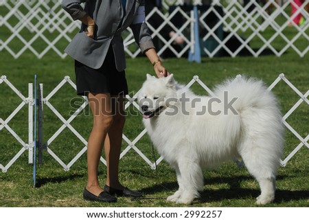 dog poses with handler for the judges - stock photo