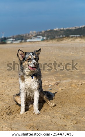 dog posing on the sand