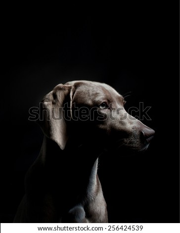 Dog posing to camera on studio