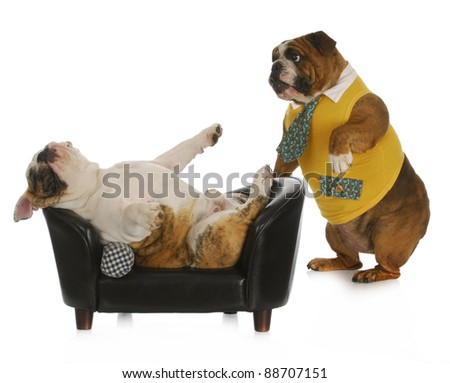 dog psychology - bulldog standing looking at another laying on a couch with reflection on white background - stock photo