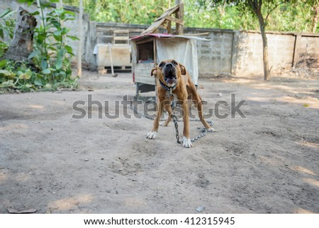 dog puppy barks, pit bull - stock photo