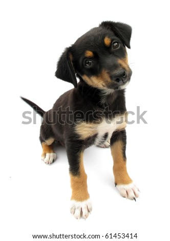Dog puppy isolated on white background - stock photo