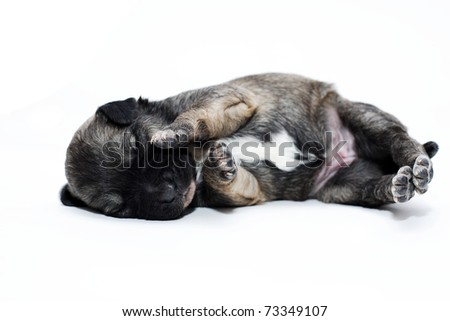 dog puppy sleeping