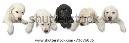 Dog puppy white and black cut out on white background - stock photo
