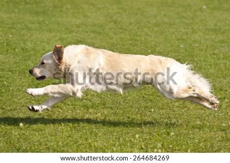 Dog Race - stock photo