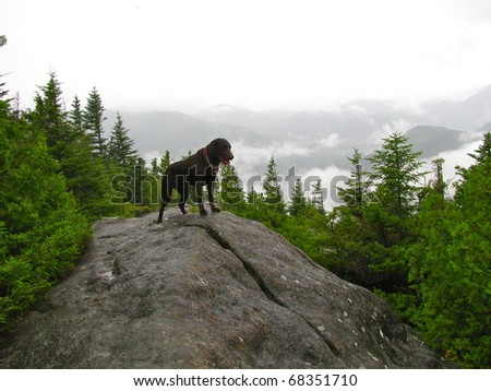 Dog reaches summit by climbing  mountain in the rain - stock photo