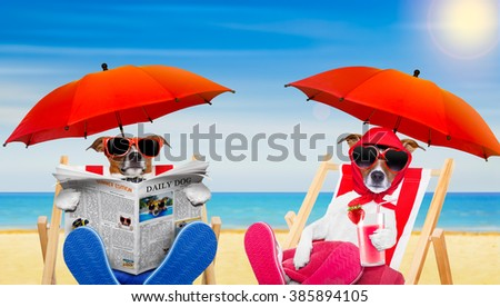 dog reading newspaper on a beach chair with wife drinking cocktail under umbrella  on summer vacation holidays in hammocks - stock photo