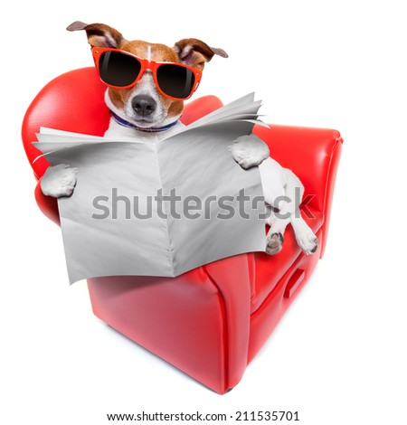 dog reading the newspaper on a red fancy funny sofa , resting and relaxing