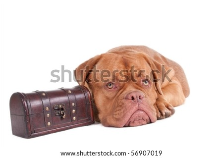 Dog ready to go on a trip - stock photo