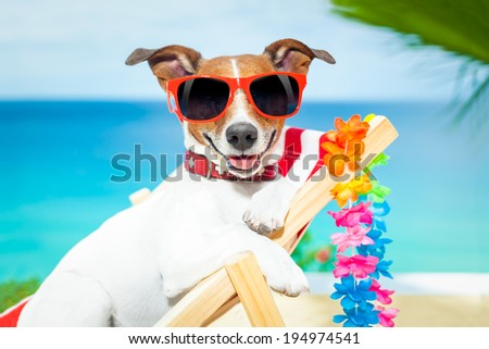 dog relaxing on a fancy red deckchair - stock photo