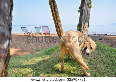 dog relaxing on a  hammock on the beach,select focus - stock photo