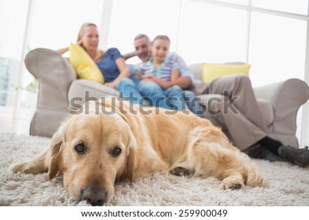 Dog relaxing on rug with family in background on sofa at home - stock photo