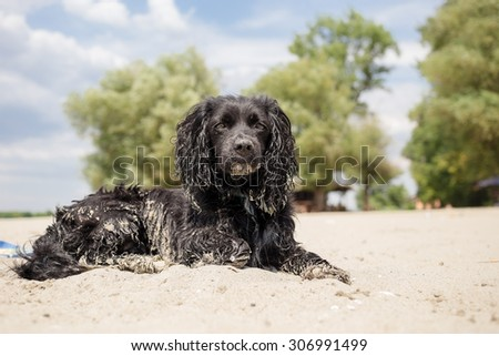 Dog relaxing on the beach - stock photo