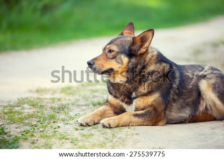 Dog relaxing outdoors in summer - stock photo