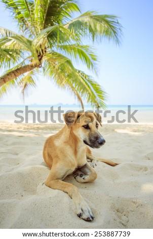 Dog rest under the palm tree on island. - stock photo