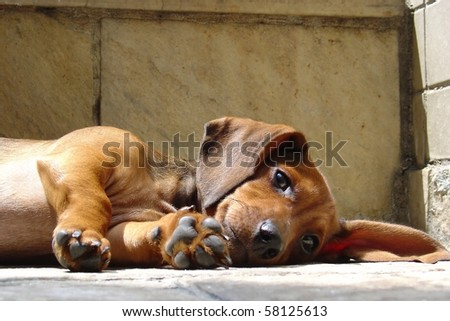 Dog resting - stock photo