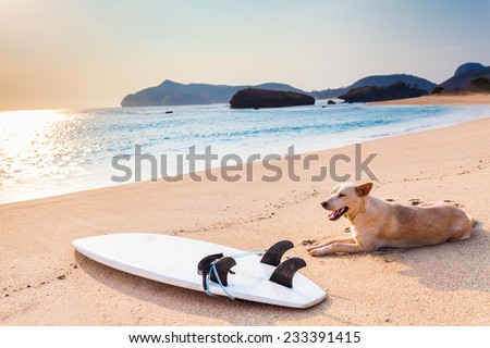 Dog resting after surfing near the surfboard - stock photo