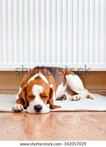 Dog resting near a warm radiator on wooden to floor