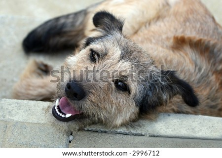 Dog resting on the floor