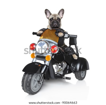 Dog riding on a motorcycle - stock photo