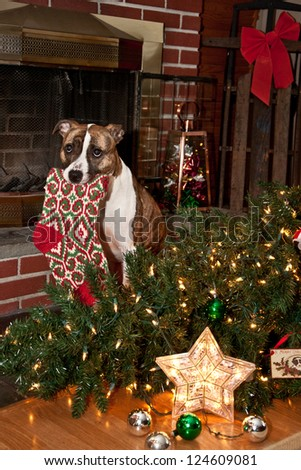 Dog Ruins Christmas - stock photo